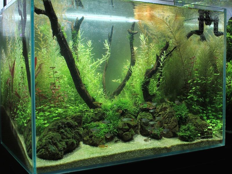 Как сделать воду прозрачным в аквариуме
